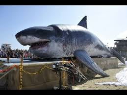 biggest megalodon shark real megalodon found world s biggest shark ever found youtube