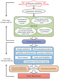 Energy Flow In Plants Concept Map Frontiers An Improved Fruit Transcriptome And The Identification