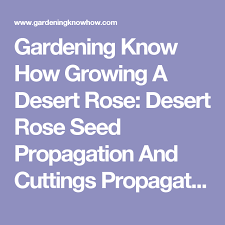 how to pruning back a desert rose photo tutorial plant swap