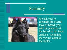 belgian sheepdog association the belgian sheepdog presented by belgian sheepdog club of