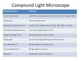 compound light microscope function cellular structure and function ppt video online download