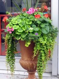 Flower Ideas Best 25 Urn Planters Ideas On Pinterest Urn Garden Pots Ideas