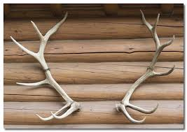 deer antler decor using deer antlers to achieve a rustic home decor