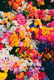 best 25 bright flowers ideas on pinterest bright color wedding