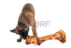 belgian sheepdog and cats belgian sheepdog images u0026 stock pictures royalty free belgian