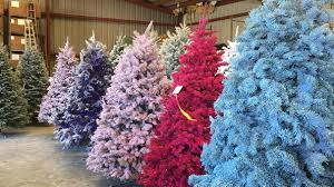 living blue spruce tree home decoration