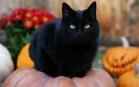 cute cat halloween backgrounds black fat cat wallpapers black fat cat stock photos