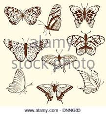 butterfly set insect doodle sketch collection stock vector art