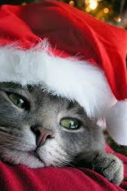 kitty christmas iphone wallpaper free download