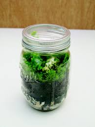 how to make a mini terrarium for dinosaurs a kids craft project