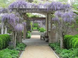 Trellis For Wisteria Plant Of The Week Wisteria Gardenista