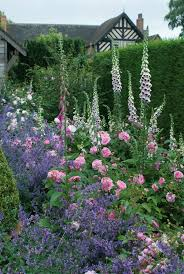 roses in mixed borders gallery