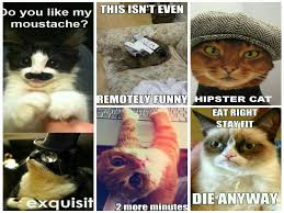 Hipster Cat Meme - cat meme quote funny humor grumpy 92 wallpaper 1600x1200