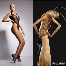 Malibu Strings Meme - ms fleekiswa ntando duma mocked through an alien meme youth village