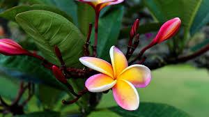 Hawaiian Flowers And Plants - hawaiian flowers wallpaper