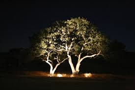 big trees outdoor lighting perspectives of northern new jersey