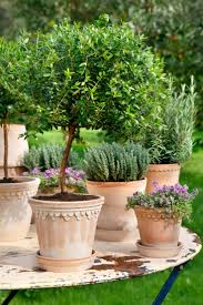 Potted Patio Trees by Low Maintenance Plants With Beautiful Blue Flowers The Best Ideas