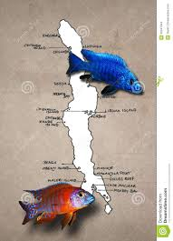 Malawi Map African Lake Malawi Map With Fishes Stock Images Image 22347544