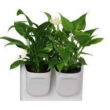 Wall Mounted Planters by Collection Of Indoor Decorative Planters All Can Download All