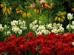 new york botanical garden a flowering ode to emily dickinson npr