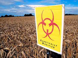What Are Gmos And Are They Safe Escali Blog