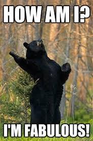 I Am Fabulous Meme - how am i i m fabulous fabulous bear quickmeme