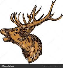 red deer stag head roaring drawing u2014 stock vector patrimonio