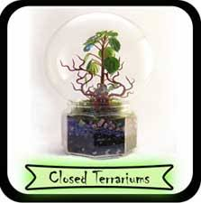 archived gallery of terrariums thyrza ca