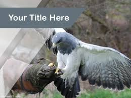free animals u0026 wildlife powerpoint templates themes u0026 ppt