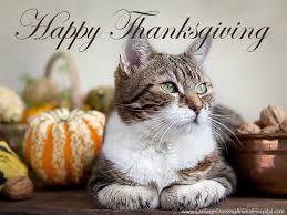 happy thanksgiving veterinarians waterloo ontario carriage