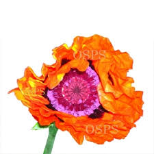 hues of orange oriental poppy flower seeds prince of orange g2 an extremely bold