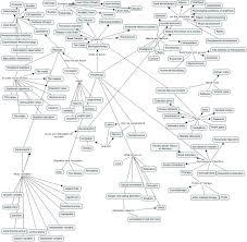 Nervous System Concept Map Hadams1 Spanish