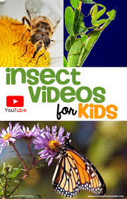 insect videos for kids primary theme park