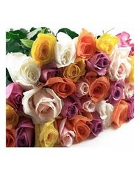 wholesale roses 100 stem assorted roses amazing