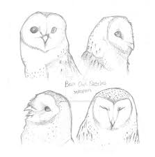 barn owl sketches 1 by spectra sky on deviantart