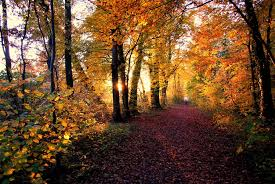 forest images Home page forest europe jpg