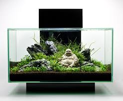 Aquascape Environmental Best 25 Aquarium Aquascape Ideas On Pinterest Aquarium Ideas