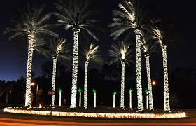 palm tree lights b k lighting architectural outdoor landscape