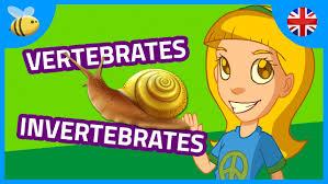 vertebrates and invertebrates animals part 1 kids videos youtube