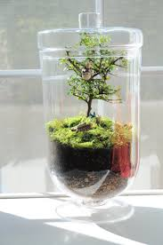 bonsai in a closed terrarium i u0027m hoping this will be my next