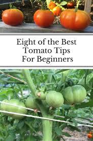2545 best gardens images on pinterest veggie gardens gardening