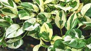 the best air purifying plants
