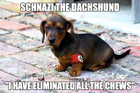 Wiener Dog Meme - master i will win this race for you gif on imgur