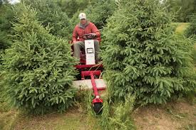 ventrac tree farms u0026 nurseries