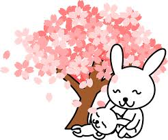 cute trees cherry blossom free pictures on pixabay