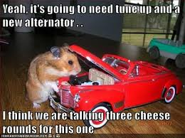 Car Mechanic Memes - i can has cheezburger mechanic funny animals online cheezburger