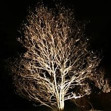 Well Lights Artistic Landscapes Low Voltage Landscape Lighting