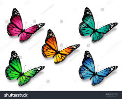 group butterflies isolated on white background stock illustration