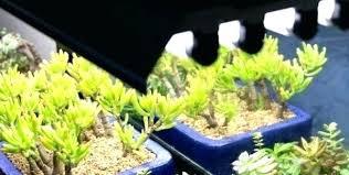 plant grow lights lowes plant grow lights lowes coolman club