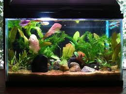 freshwater aquarium betta fish aquarium design ideas